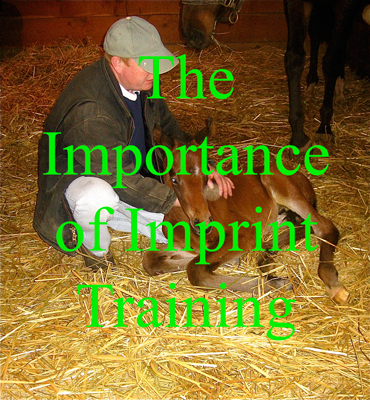 The Importance of Imprint Training